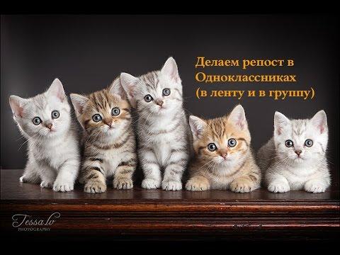 Как сделать репост в Одноклассниках (в ленту и в группу)